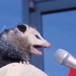possum cover