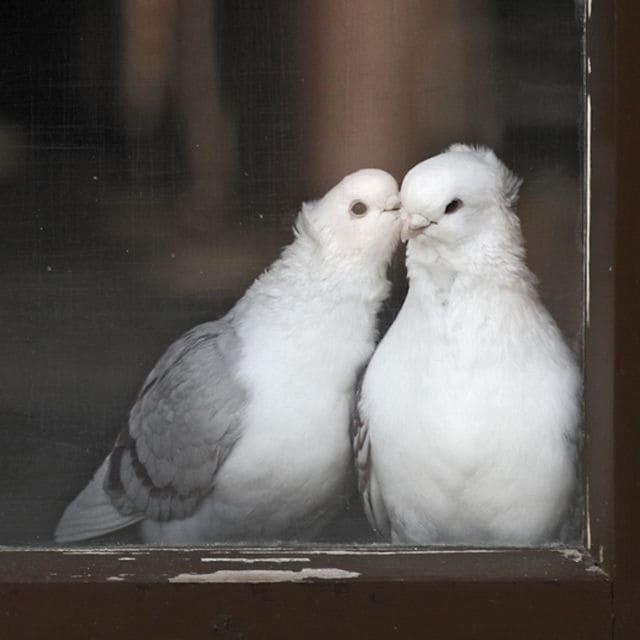 monogamie 3
