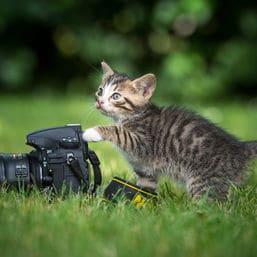 Katzenfotoverbot Saudi Arabien