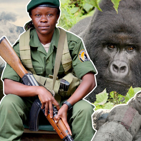 virunga nationalpark cover