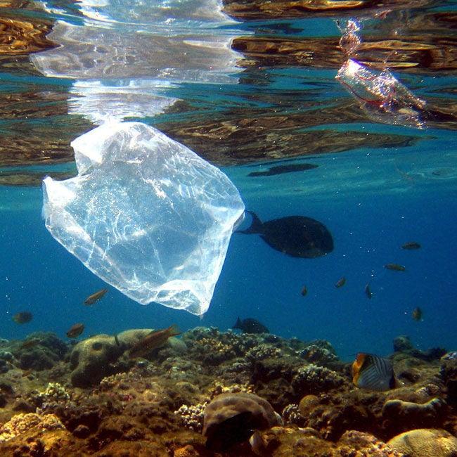 plastiktueten cover
