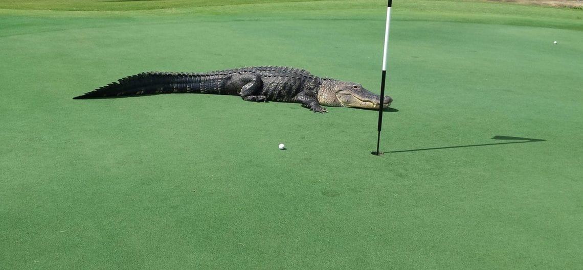 dpa fotograf myakka pines golf club handout