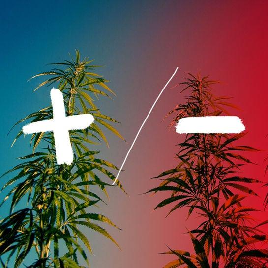 interview cannabis
