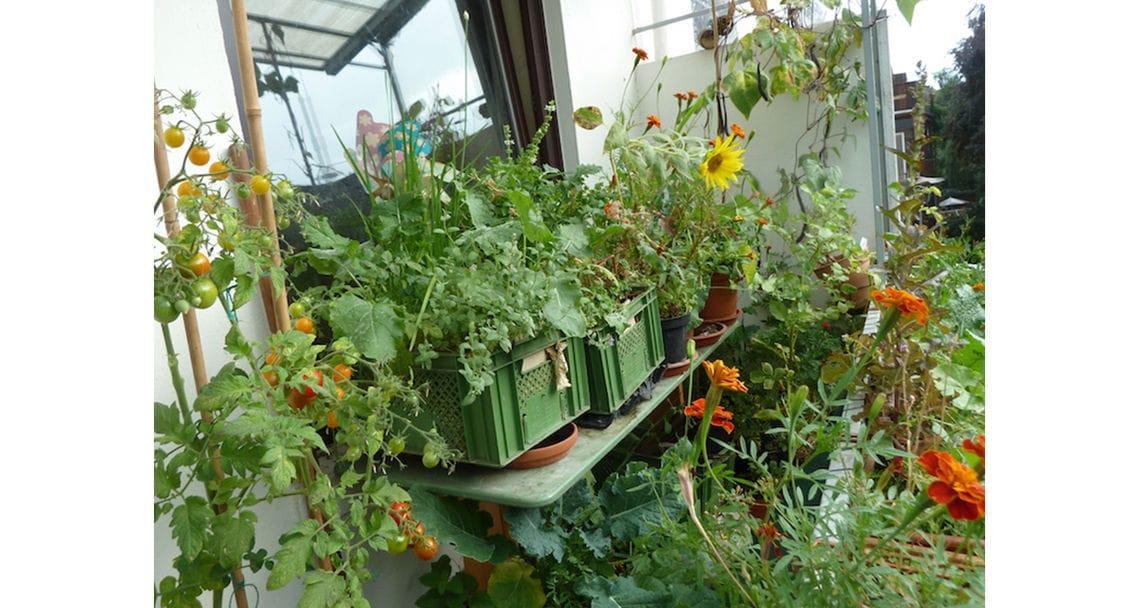 urban garden galerie 3
