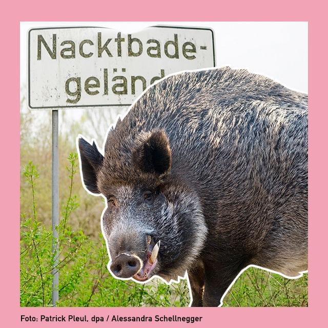 buzz wildschwein fkk cover