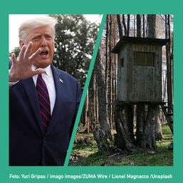 buzz trump foresthouse cover